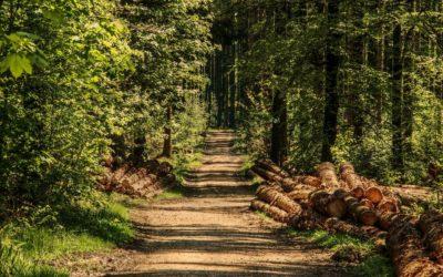 La desserte : base de l'exploitation forestière
